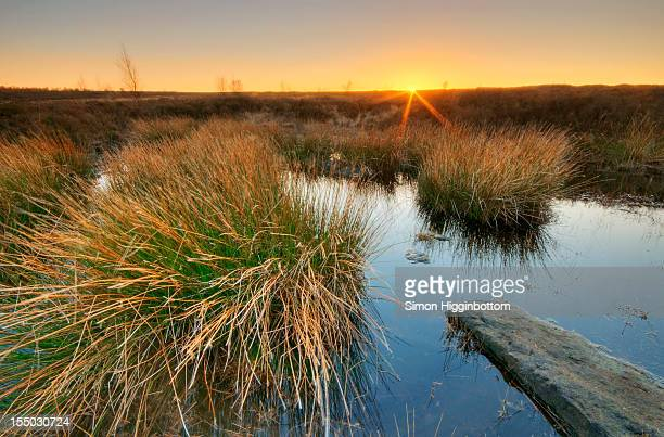 oasis on the moors, west yorkshire - simon higginbottom stock pictures, royalty-free photos & images