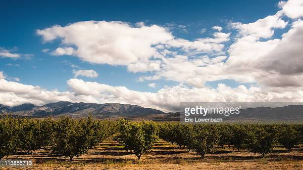 oasis - peach tree stock pictures, royalty-free photos & images