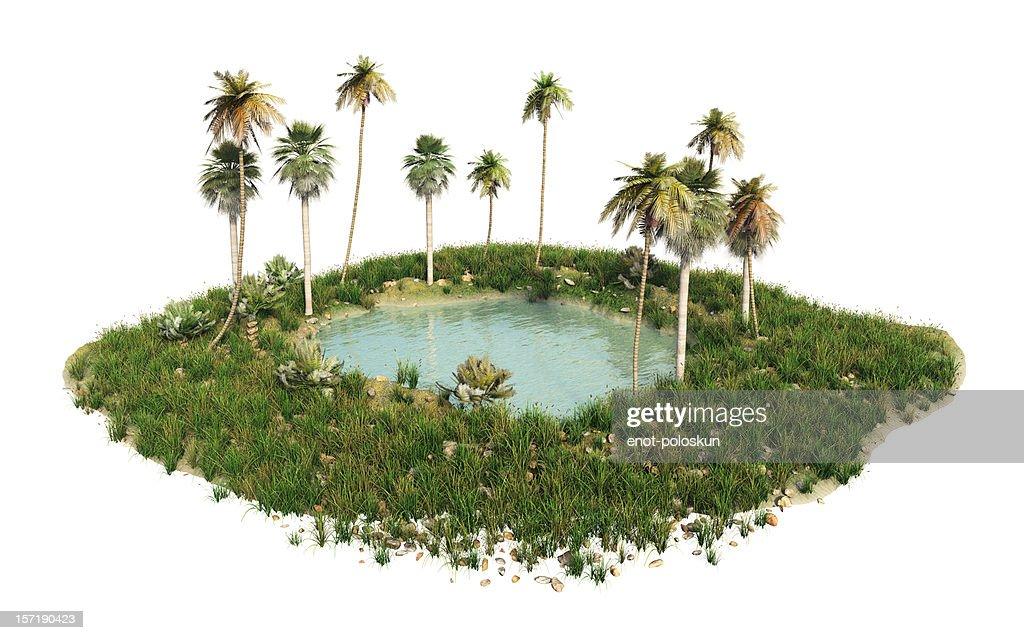 oasis : Stock Photo