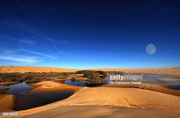 oasis - tunisia stock pictures, royalty-free photos & images