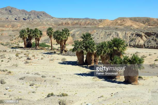 oasis with palm trees in a mountaineous desert - rainer grosskopf ストックフォトと画像