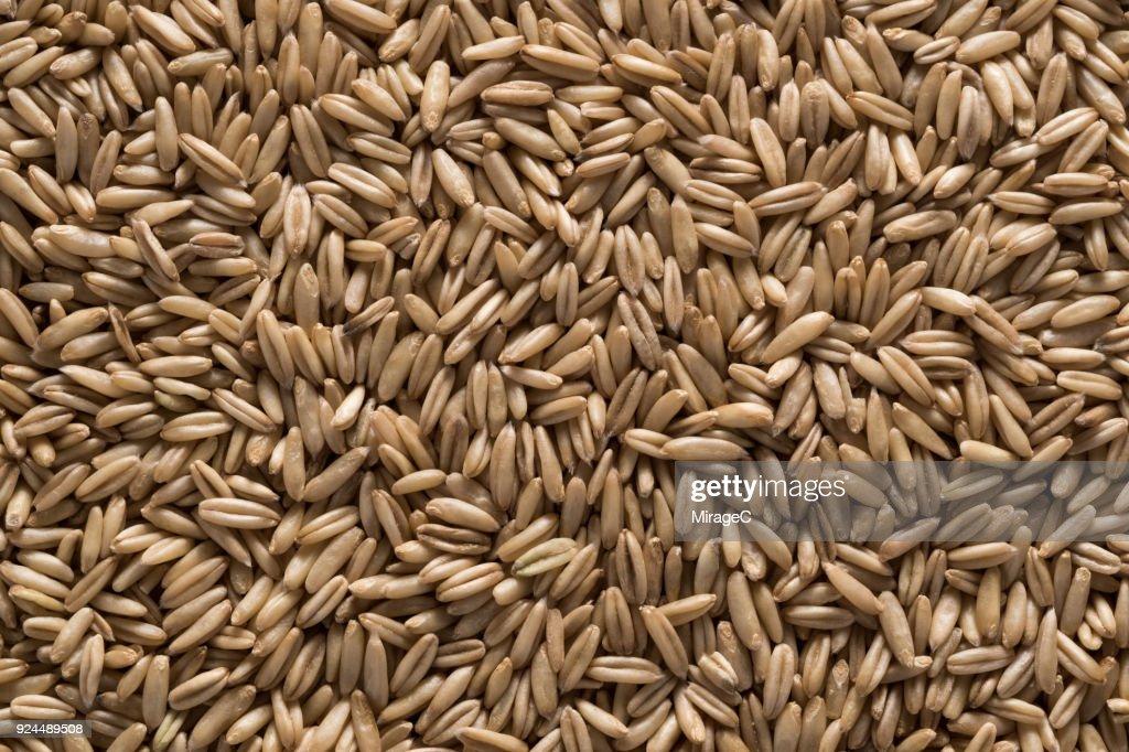 Oat Grains : Stock Photo