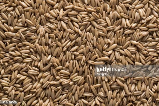 oat grains - cereal plant stock pictures, royalty-free photos & images