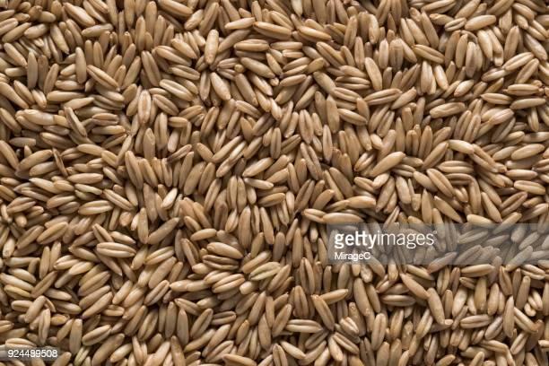 oat grains - pflanzensamen stock-fotos und bilder