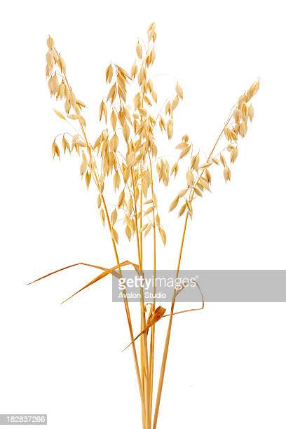 oat - cereal plant stock pictures, royalty-free photos & images