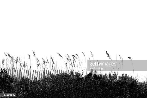 oatline - reed grass family stock photos and pictures