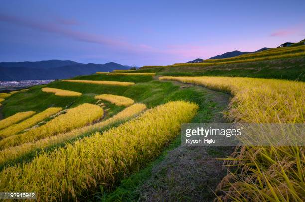 obasute rice terrace known as the famous viewpoint of nagano city located in chikuma town - terrassenfeld stock-fotos und bilder