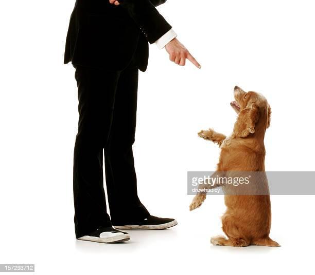 Obedient Hund und gut gekleideter Mann.