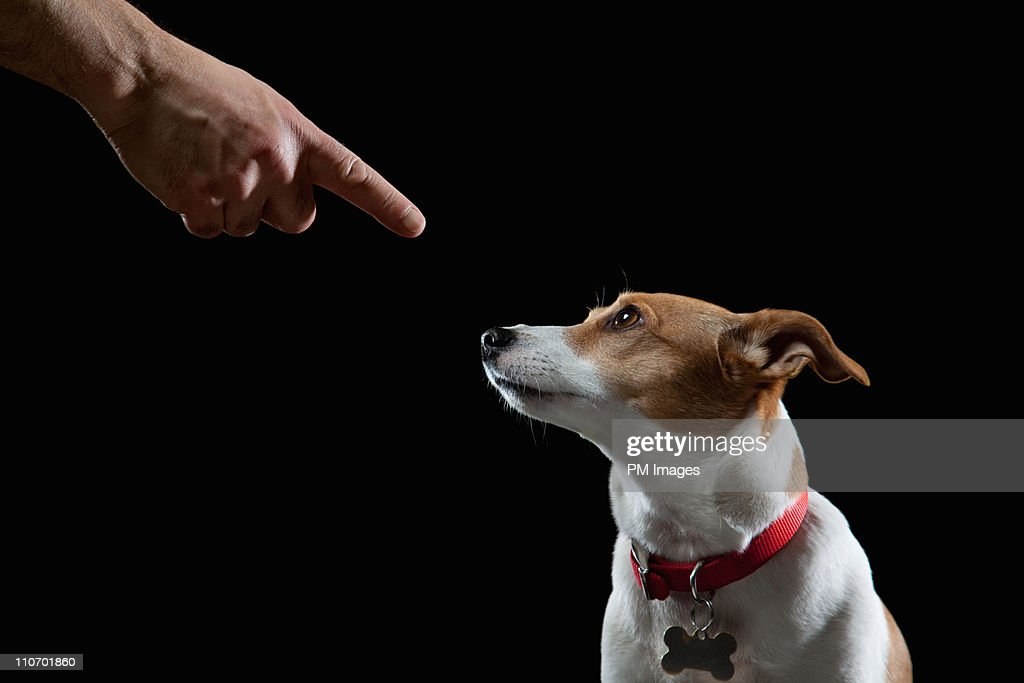 Obedient Dog : Stock Photo