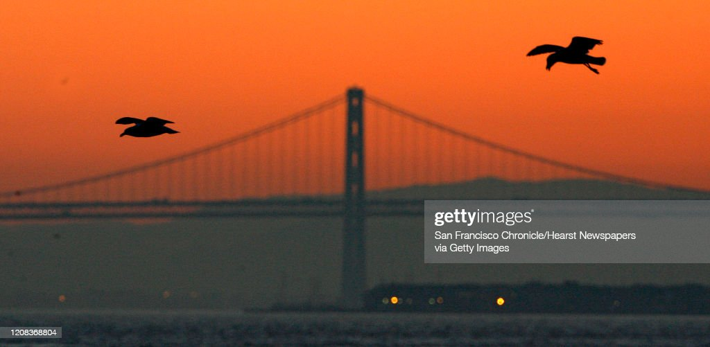 The crack of dawn over the Bay Bridge while seagulls hovers over Fort Baker fishing pier looking for their breakfast. : News Photo