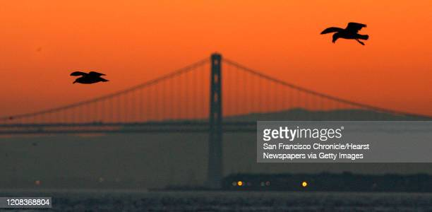 {object name} The crack of dawn over the Bay Bridge while seagulls hovers over Fort Baker fishing pier looking for their breakfast Warm mild weather...