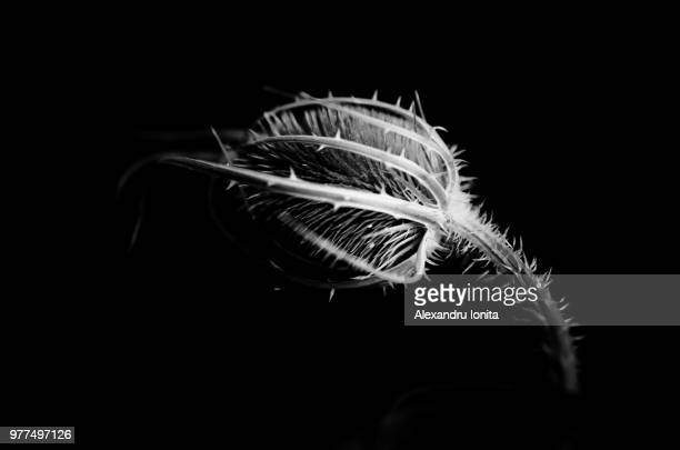 oblivion - invertebrate stock pictures, royalty-free photos & images