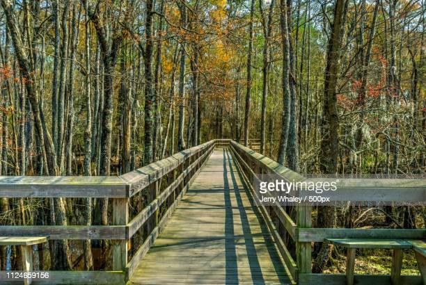 Observation Deck, Spring Color, Lumber River, Fair Bluff, Nc