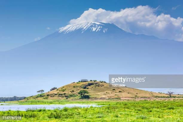 observation hill and mount kilimanjaro with lake amboseli - albero spoglio foto e immagini stock