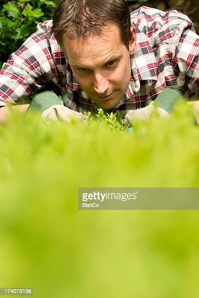 Obsessiv Mann arbeitet im Garten, perfekt