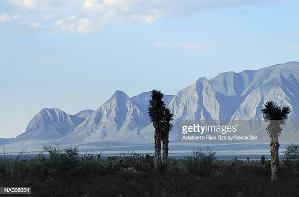 ocampo - nuevo leon stock pictures, royalty-free photos & images