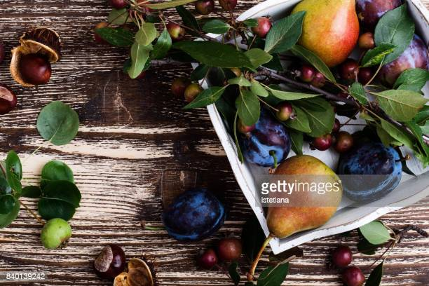 occasions. thanksgiving autumnal still life - fall harvest stock pictures, royalty-free photos & images