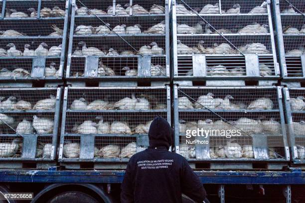 Occupation of the association quot269 Life Libération Animalequot of the slaughterhouse of Monsols on 27 April 2017 France About fifty activists took...