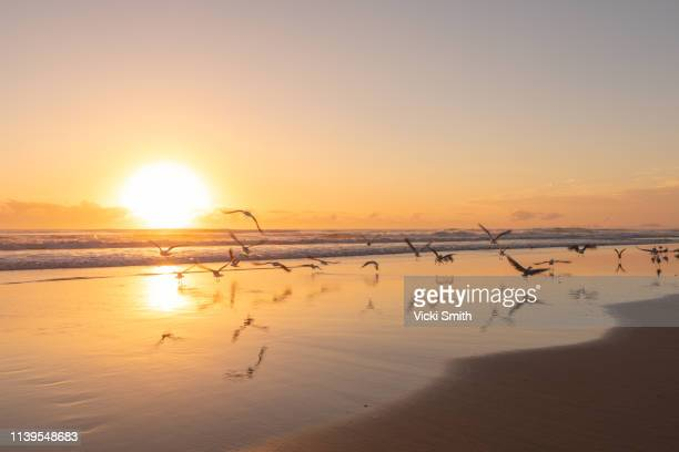 ocean and beach scene with flying birds - tranquil scene photos et images de collection