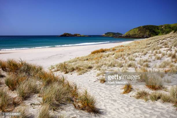 ocean beach at whangarei heads in northland - northland new zealand stock pictures, royalty-free photos & images