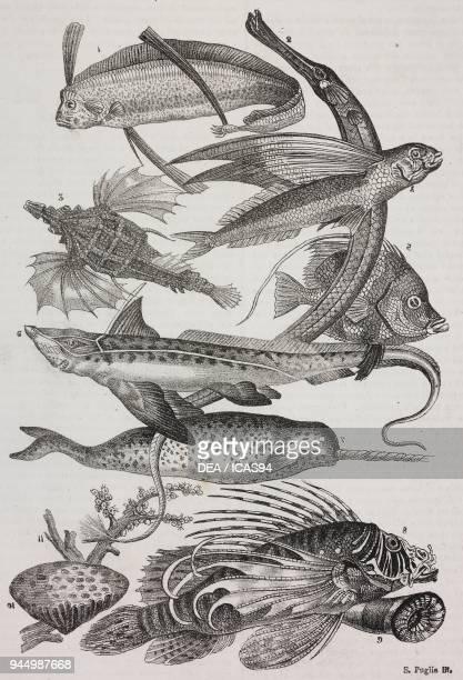 1 Dattiloftera 2 Syngnathus 3 Pegasus 4 Trachypterus 5 Chaetodon 6 Rabbit fish 7 Unicorn 8 Flying Pteroids 9 Attinia 10 Polyclinus 11 Coral...