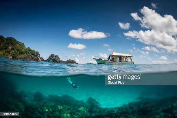 ocean realm - brazil stock pictures, royalty-free photos & images