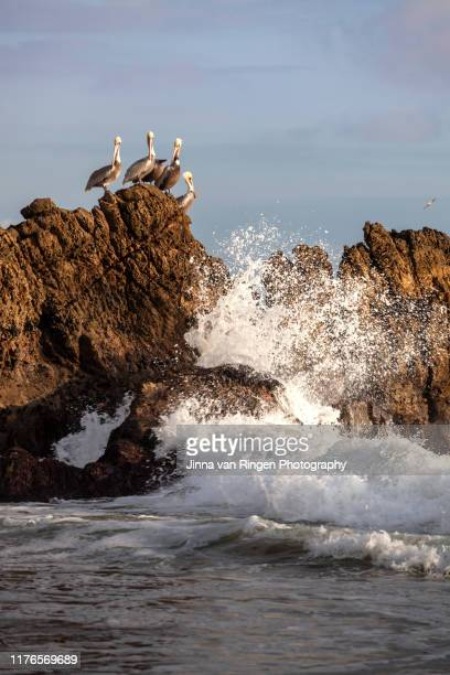 ocean waves crashing into rocks with pelicans sitting on it - malibu beach stock pictures, royalty-free photos & images