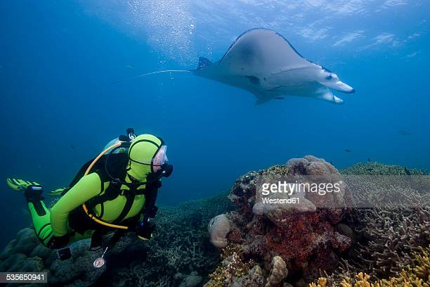 Oceania, Micronesia, Yap, Diver with reef manta ray, Manta alfredi