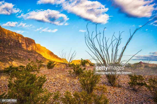 ocotillo and the sierra ponce mountains - chihuahua desert stock pictures, royalty-free photos & images