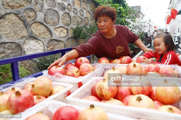 Oct. 11, 2020 -- A villager loads pomegranates onto a truck in Liuyuan Village, Lieshan District of Huaibei City, east China's Anhui Province, Oct....