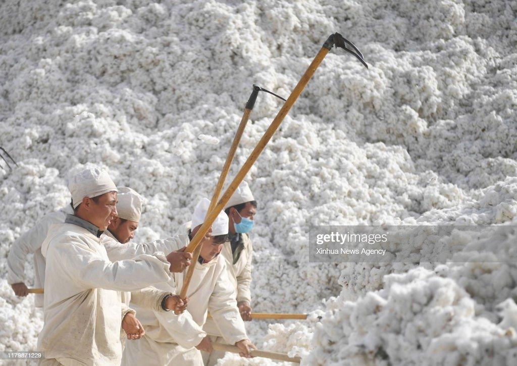 CHINA-XINJIANG-AWAT-AGRICULTURE-COTTON (CN) : News Photo