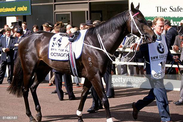 Octagonal is taken through the mounting yard before the start of the 1995 BMW Cox Plate held at Moonee Valley Race Course October 28 1995 in...