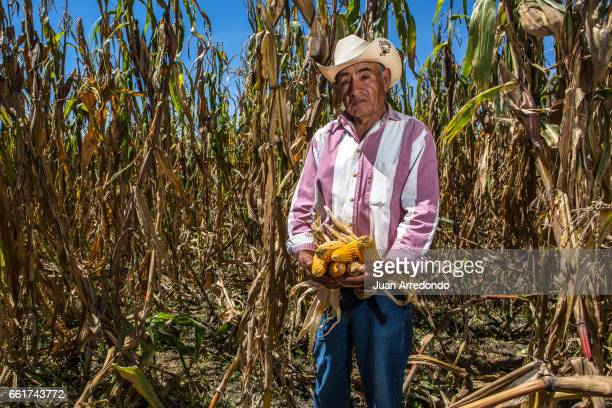 October 10 2015 Efrain Bermudez a farmer from the Maizes de Colores with his harvest of Maiz Criollo Maizes de Colores is a Cooperative that works to...