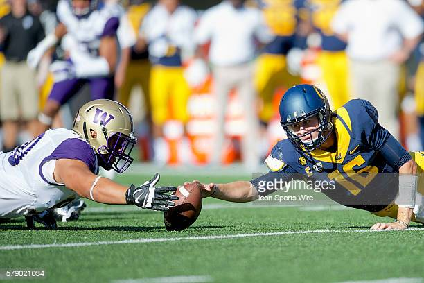 Washington defensive lineman Taniela Tupou fights for a fumble by California quarterback Jared Goff during the NCAA football game between the...