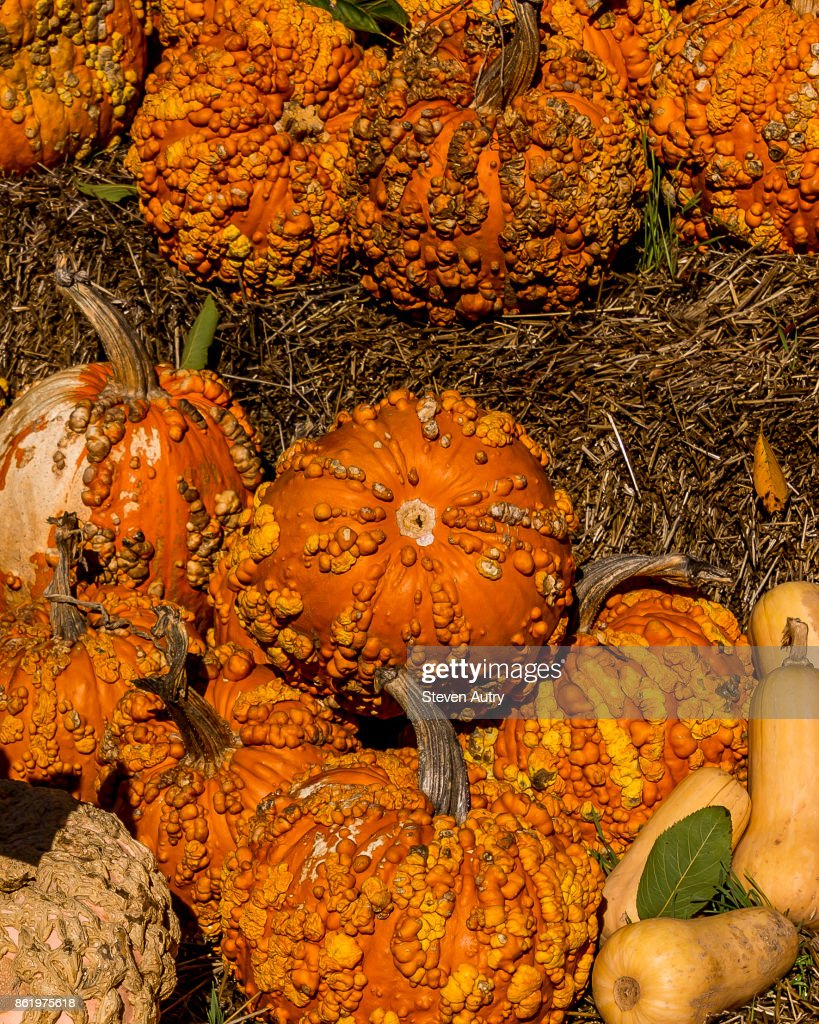 october 11 2017 dallas texas usa pumpkins on display at a city