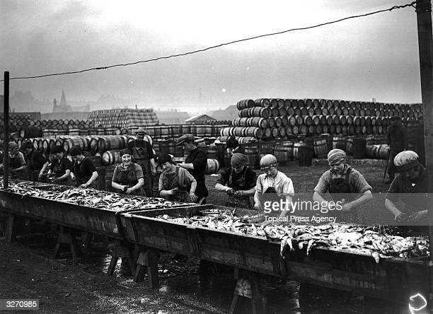 Women at work on a catch of herring at Lowestoft England