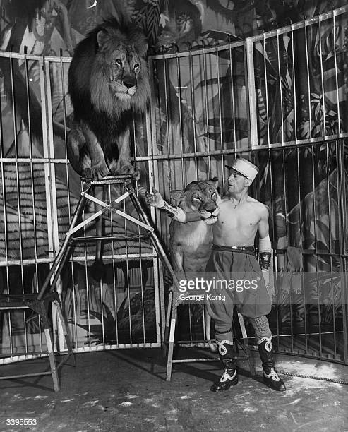 Former French Foreign Legionnaire and lion tamer Captain Jim Roose with the two lions who make up his act 'Jungle Fantasy' Captain Roose works with...