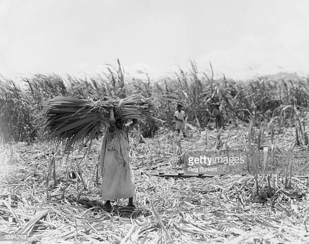 A woman carries a large bundle of crop leaves used to construct roofing