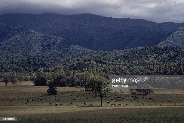 The Great Smoky Mountains in east Tennessee Part of the Apalachian Mountain range they are noted for their luxuriant forest cover