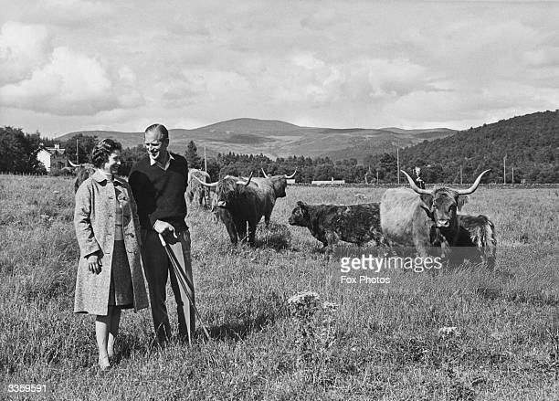 Queen Elizabeth II and Prince Philip the Duke of Edinburgh walking amongst Highland cattle in the grounds of Balmoral Castle Scotland Prince Albert...