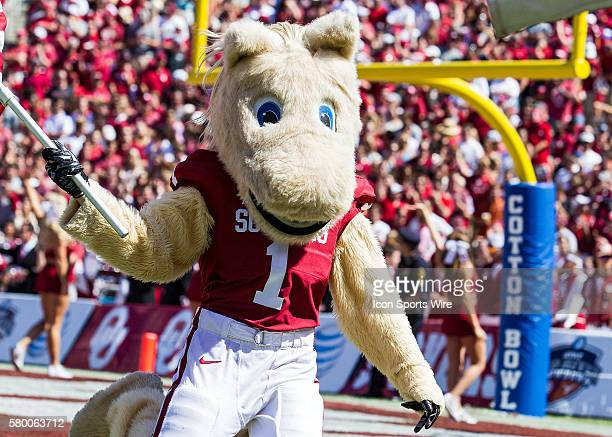 Oklahoma Sooners mascot during the Oklahoma Sooners versus the Texas Longhorns in the Red River Rivalry at the Cotton Bowl in Dallas, TX.