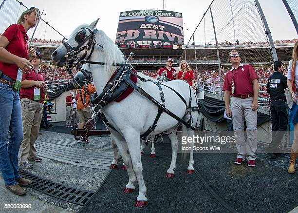 Oklahoma's horses stand in the tunnel before the Oklahoma Sooners versus the Texas Longhorns in the Red River Rivalry at the Cotton Bowl in Dallas,...