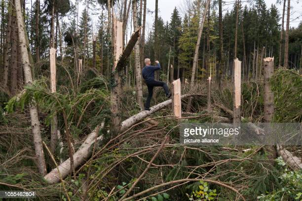 Farmer Alexander Huber from Tattenkofen stands in a forest section devastated by the storm During the night from 2910 to gusts of wind caused trees...