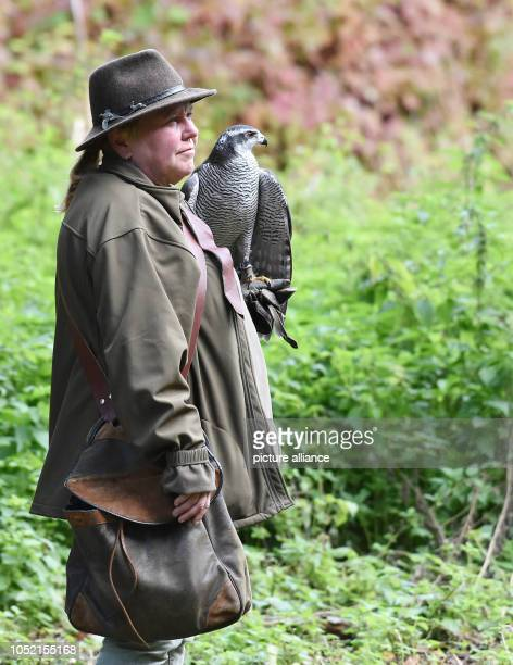 Andrea Badouin and Habichtdame Thora observe the surroundings in the park at Charlottenburg Palace Two to three times a week the falconer goes...