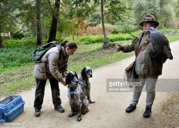 Andrea Badouin walks through the park at Charlottenburg Castle together with her hunting friend Katja Heumann's Habichtdame Thora and the hunting...