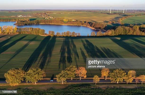 31 October 2018 Brandenburg Alt Zeschdorf Avenue trees throw long shadows in the morning light on a field at the lake Aalkasten not far from Alt...