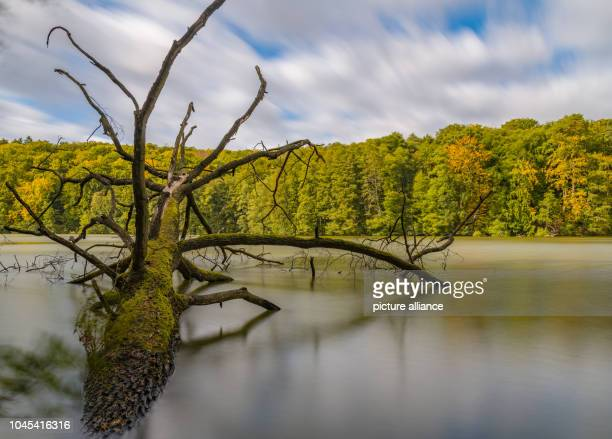 Clouds are moving over the large Treppelsee in the Schlaubetal Nature Park The Schlaubetal Nature Park founded at the end of 1995 in the heath and...
