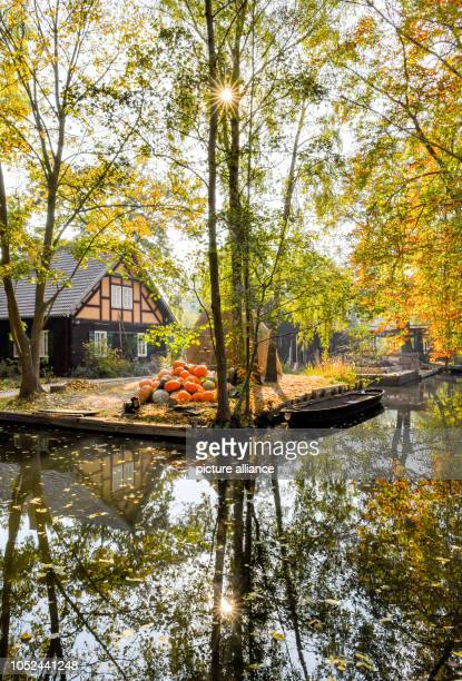 A wooden house with pumpkins and a barn is reflected in a flow in the autumnal Spreewald Photo Patrick Pleul/dpaZentralbild/ZB