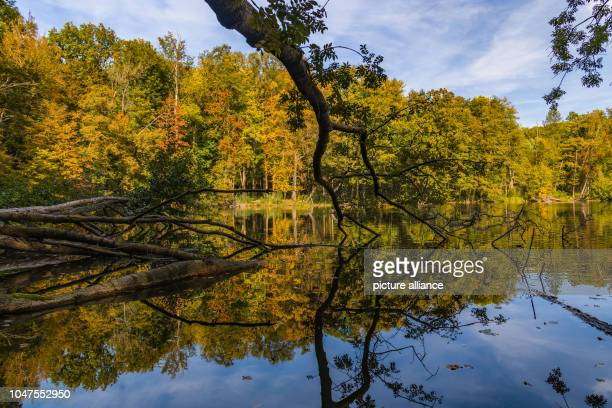 06 October 2018 Brandenburg Pritzhagener Mühle Autumnally colourful trees line the shores of the Great Tornow Lake which lies in the Märkische...