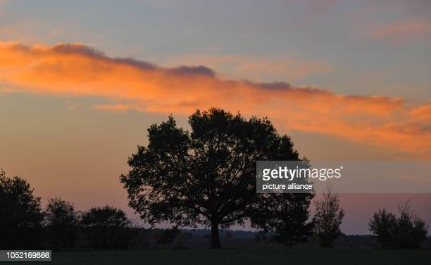 15 October 2018 Brandenburg Sieversdorf Colorful clouds shine in the morning sky shortly before sunrise Photo Patrick Pleul/dpaZentralbild/dpa